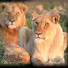 Pair of the proud pride by Chris Coetzee