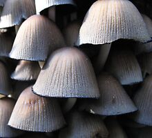 Woodland Mushrooms by Deborah Holman
