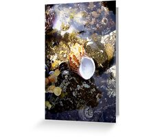 Shell on the Rocks Greeting Card