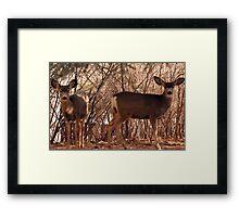 Natures neighbors Framed Print