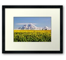 Canola Crops and Clouds Framed Print