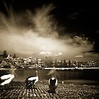 Pelicans at the Haven, Terrigal by monkeyfoto