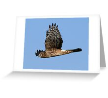 The Flight Greeting Card