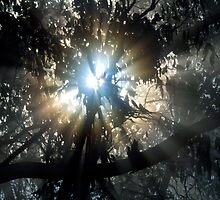 Forest Sunrays II by Ern Mainka