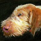 Agatha the Spinone by tomrhody
