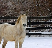 Pony Snow by Brad Sauter
