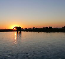 Chobe Sunset by Andrew Stacey