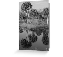 Old South Florida Palms Greeting Card