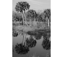 Old South Florida Palms Photographic Print