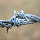 Barbwire by wendy Wood