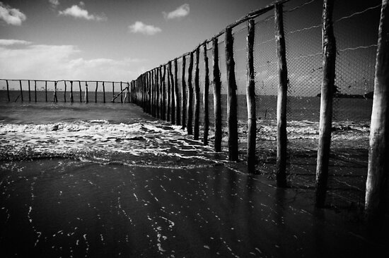 Stinger Nets by Ross Robinson