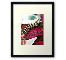 Yikes! Spikes! Framed Print