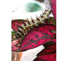 Yikes! Spikes! Photographic Print