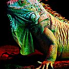 Iguana From The Deep by Bobby McLeod