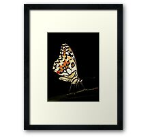 Lime Butterfly Framed Print