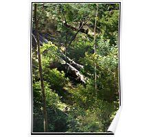 Fallen Trees Poster