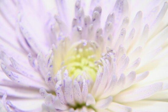Petals by Debbie Black