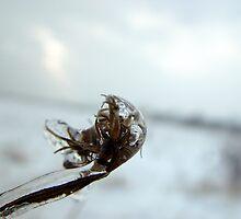frozen by MCSuperVillain