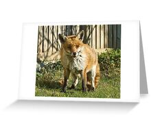 Sleepy fox in suburbia Greeting Card
