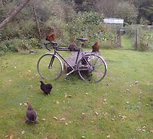 chickens on a bike by tubs