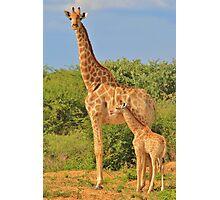 Giraffe Love - Mom is the Best Photographic Print