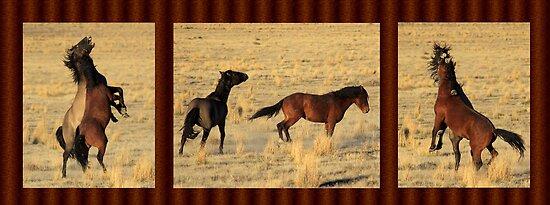 Born Wild by Gene Praag