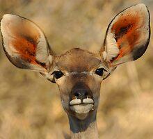 Kudu by Caroline Bland