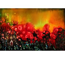 Red poppy field Photographic Print