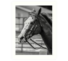 Fair Horse Art Print