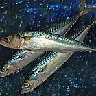 Mackerel by Caroline Bland