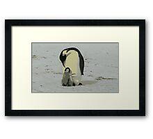 Penguin Duo Framed Print
