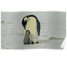Penguin Duo Poster
