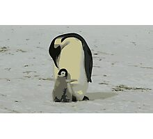 Penguin Duo Photographic Print