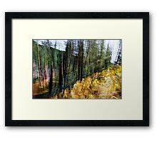 Free Forest Framed Print