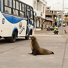 City Sea Lion by Derek McMorrine