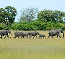 ELEPHANT FAMILY by Larry Glick