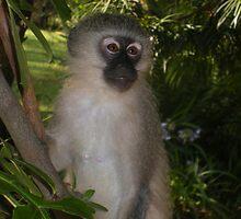 Monkey by Ashley Landis