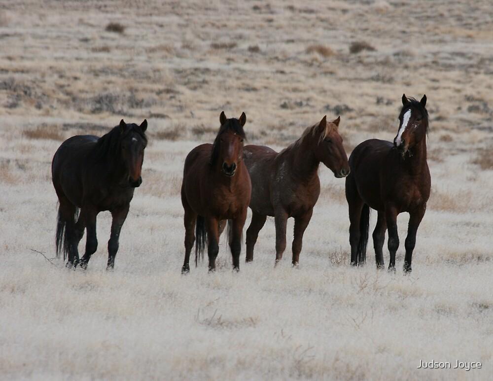 4 Wild Mustangs by Judson Joyce