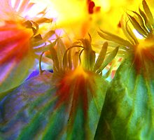 digital image inside nasturtium by picketty