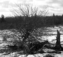 desolate by Jason LeRue