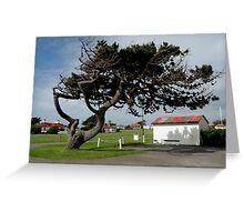 Wind Blown Tasmania Greeting Card
