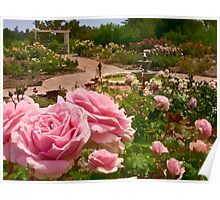 Rose garden perspective Poster