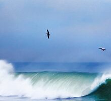 Pelicans above the surf by damhotpepper