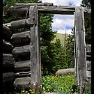 Wild Irishman Door by Kerensa Fannon