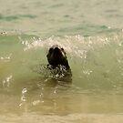 Sea Lion in wave by Derek McMorrine