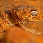 Camo Gecko by Michael Ellem