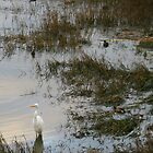 Egret in the back bay by Kat Meezan