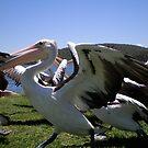The Pelican Run by Vee T