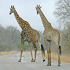 Giraffes Crossing by AARDVARK