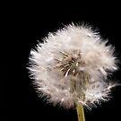 Fluff ball by Ben Shaw